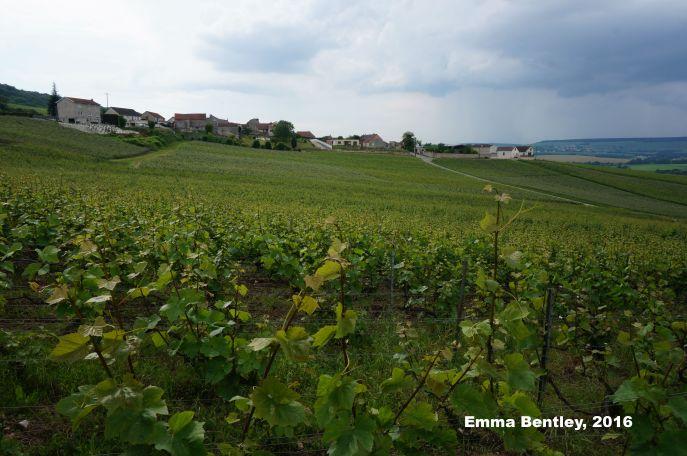 Photo Vineyard Vallée de la Marne (c) Emma Bentley