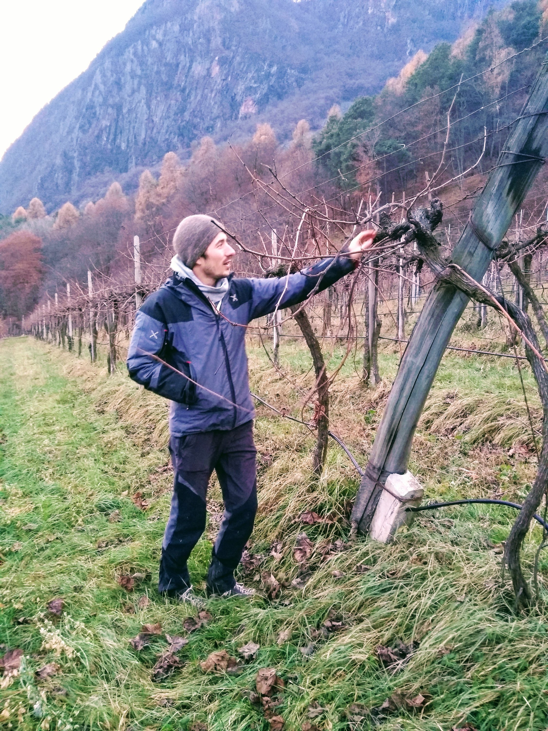 In The Vineyards With: Thomas Niedermayr